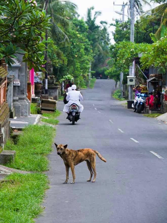 パヨガン村の通り